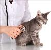 Ветеринарные клиники в Вурнарах